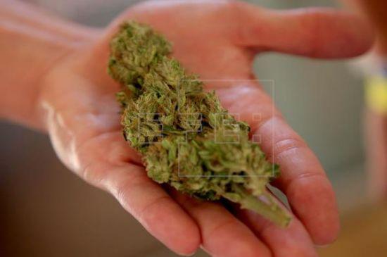 La industria del cannabis medicinal toma fuerza en Colombia con nuevas normas